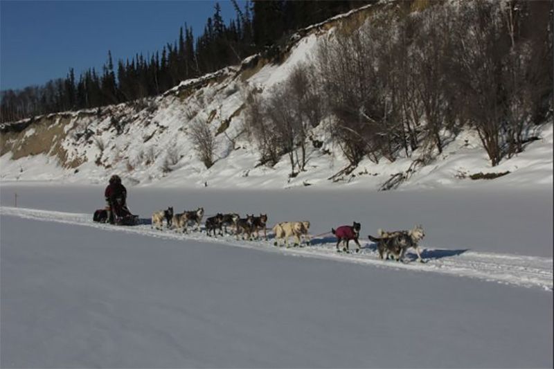 The 2015 Iditarod Race in Alaska. (courtesy Iditarod.com/Iditarod Trail Committee)