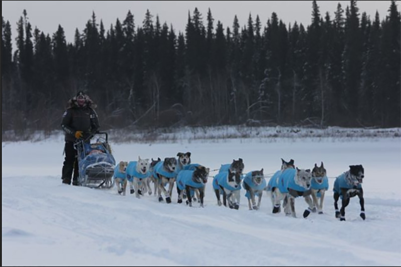 Third day of the 2015 Iditarod Race in Alaska. (courtesy Iditarod.com/Iditarod Trail Committee)