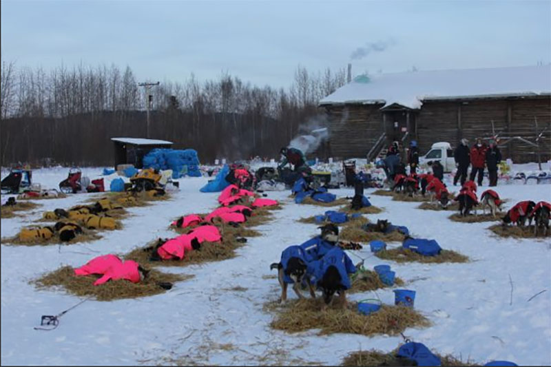 Resting during the 2015 Iditarod Race in Alaska. (courtesy Iditarod.com/Iditarod Trail Committee)